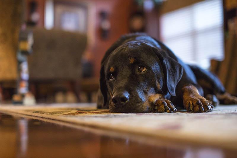 Carefree Pet Sitter - Overnight visits